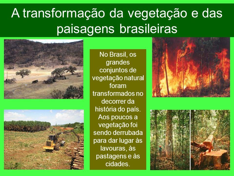 A transformação da vegetação e das paisagens brasileiras No Brasil, os grandes conjuntos de vegetação natural foram transformados no decorrer da histó
