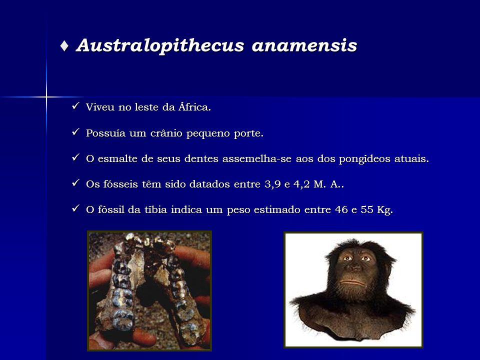 ♦ Australopithecus anamensis  Viveu no leste da África.  Possuía um crânio pequeno porte.  O esmalte de seus dentes assemelha-se aos dos pongídeos