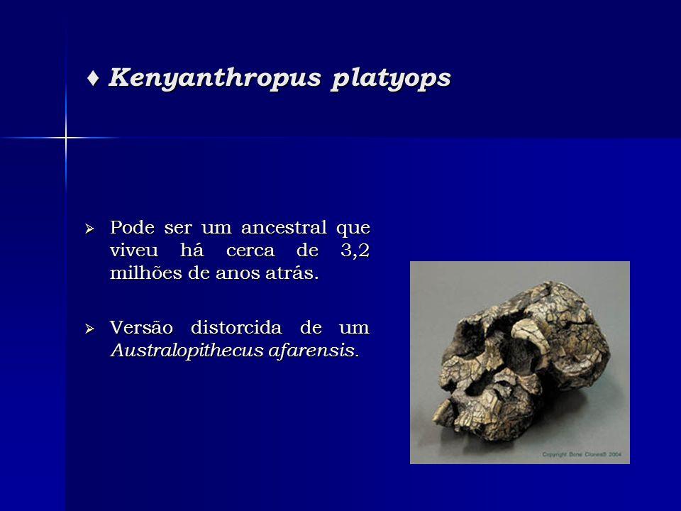 ♦ Kenyanthropus platyops  Pode ser um ancestral que viveu há cerca de 3,2 milhões de anos atrás.  Versão distorcida de um Australopithecus afarensis
