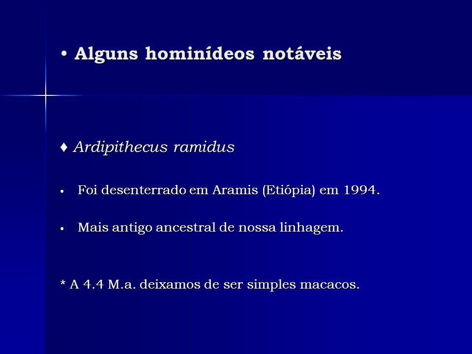 • Alguns hominídeos notáveis ♦ Ardipithecus ramidus • Foi desenterrado em Aramis (Etiópia) em 1994. • Mais antigo ancestral de nossa linhagem. * A 4.4