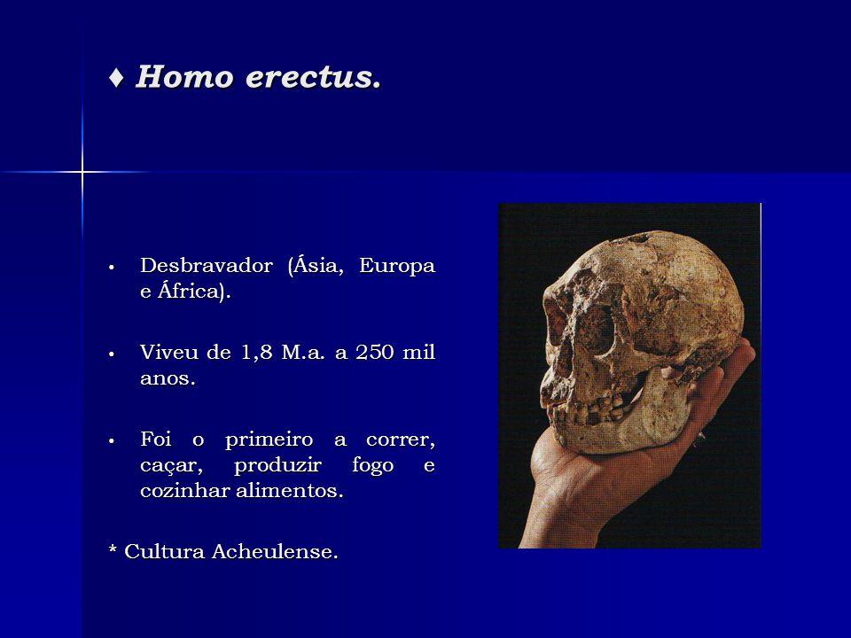 ♦ Homo erectus. • Desbravador (Ásia, Europa e África). • Viveu de 1,8 M.a. a 250 mil anos. • Foi o primeiro a correr, caçar, produzir fogo e cozinhar