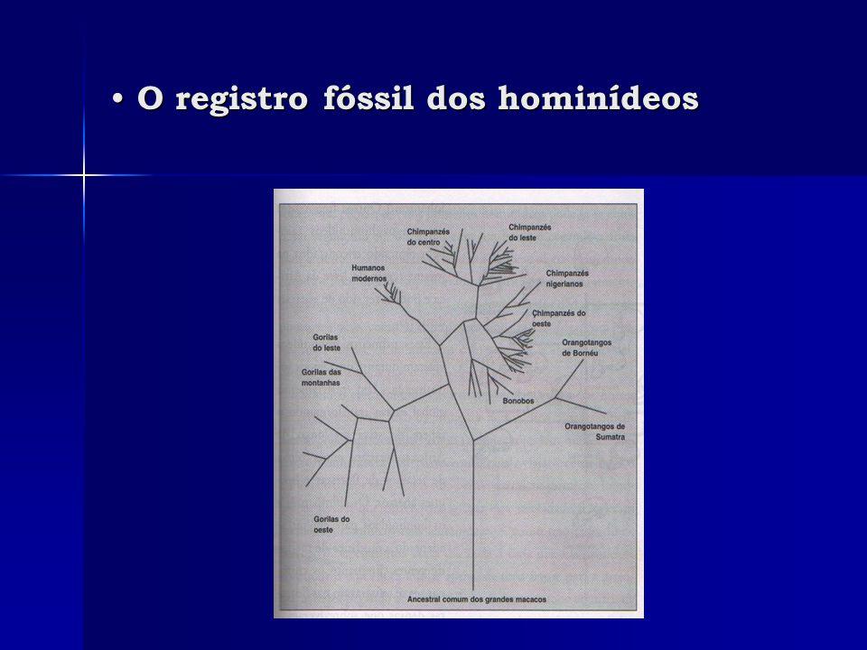 • O registro fóssil dos hominídeos