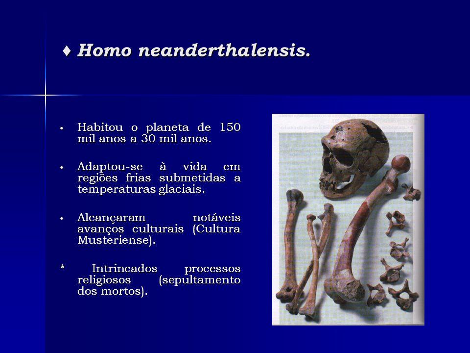 ♦ Homo neanderthalensis. • Habitou o planeta de 150 mil anos a 30 mil anos. • Adaptou-se à vida em regiões frias submetidas a temperaturas glaciais. •