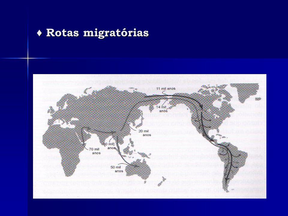 ♦ Rotas migratórias