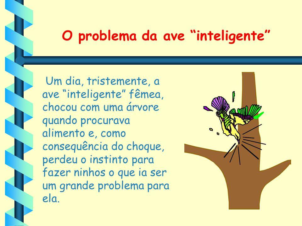 """O problema da ave """"inteligente"""" Um dia, tristemente, a ave """"inteligente"""" fêmea, chocou com uma árvore quando procurava alimento e, como consequência d"""