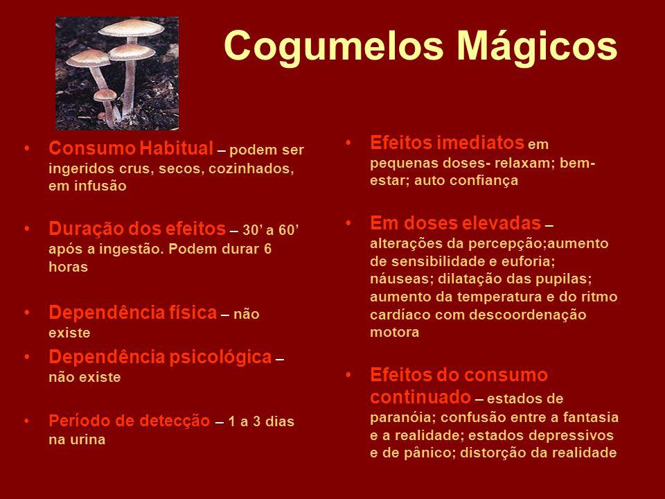 Cogumelos Mágicos •Consumo Habitual – podem ser ingeridos crus, secos, cozinhados, em infusão •Duração dos efeitos – 30' a 60' após a ingestão.