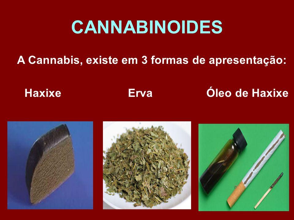 A Cannabis, existe em 3 formas de apresentação: Haxixe Erva Óleo de Haxixe CANNABINOIDES