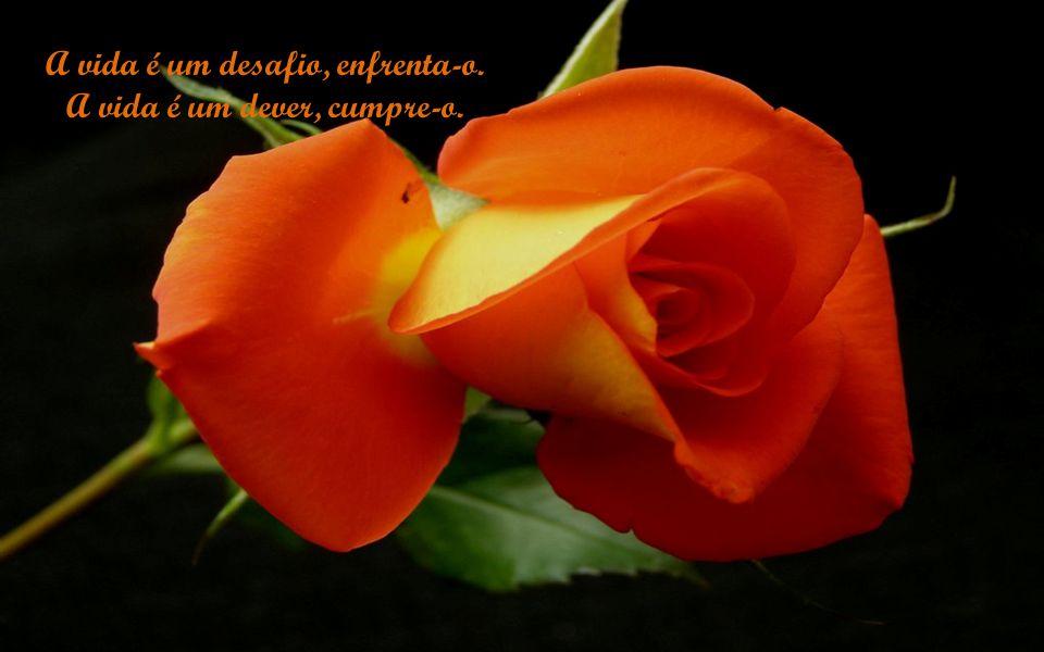 A vida é beatificação, saborei-a. A vida é sonho, torna-o realidade.