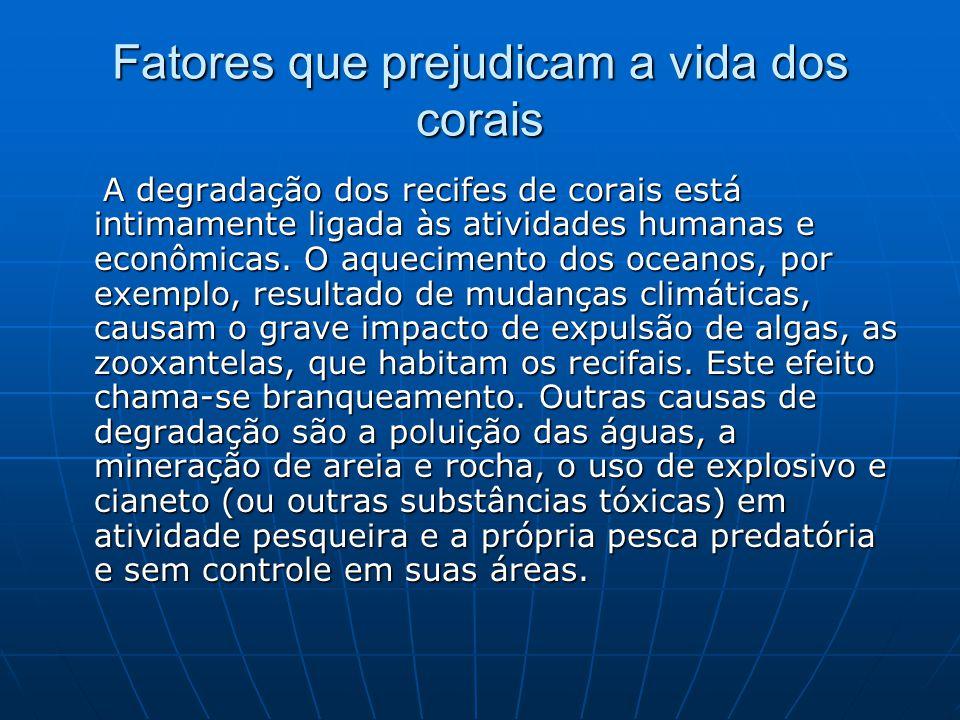 Fatores que prejudicam a vida dos corais A degradação dos recifes de corais está intimamente ligada às atividades humanas e econômicas. O aquecimento