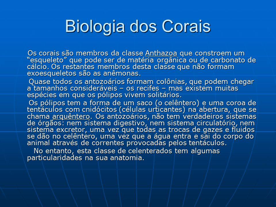 """Biologia dos Corais Os corais são membros da classe Anthazoa que constroem um """"esqueleto"""" que pode ser de matéria orgânica ou de carbonato de cálcio."""