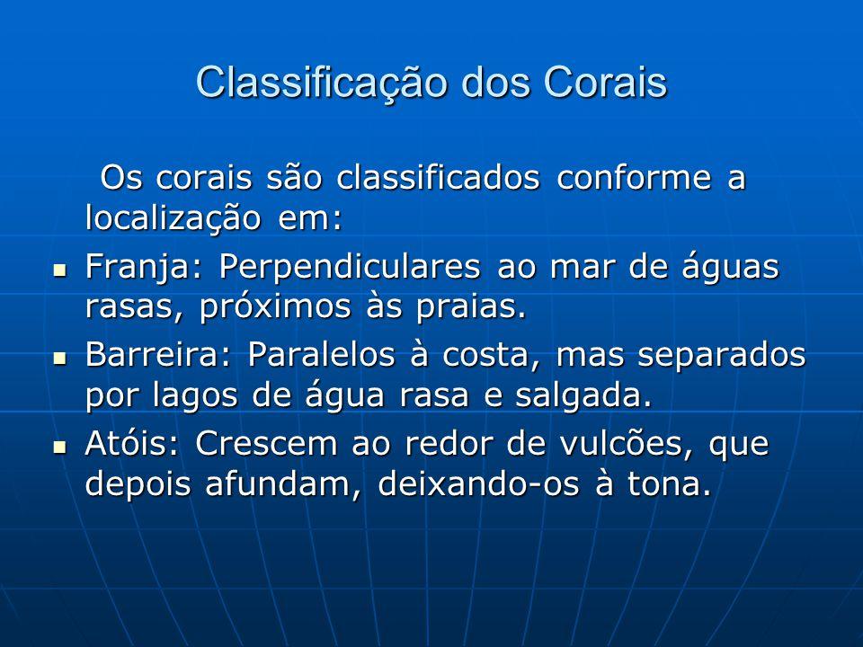 Classificação dos Corais Os corais são classificados conforme a localização em: Os corais são classificados conforme a localização em:  Franja: Perpe