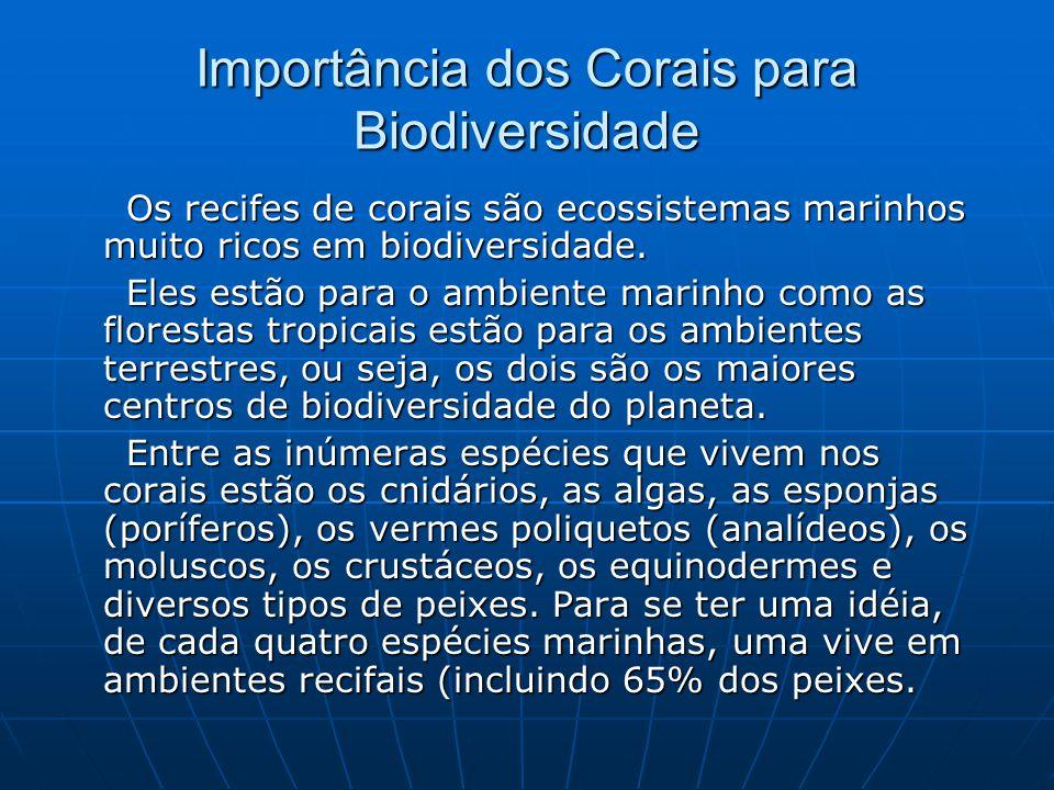 Importância dos Corais para Biodiversidade Os recifes de corais são ecossistemas marinhos muito ricos em biodiversidade. Os recifes de corais são ecos