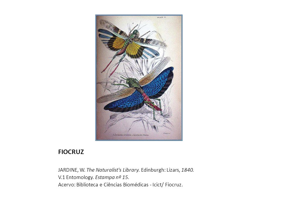 FIOCRUZ JARDINE, W.The Naturalist s Library. Edinburgh: Lizars, 1840.