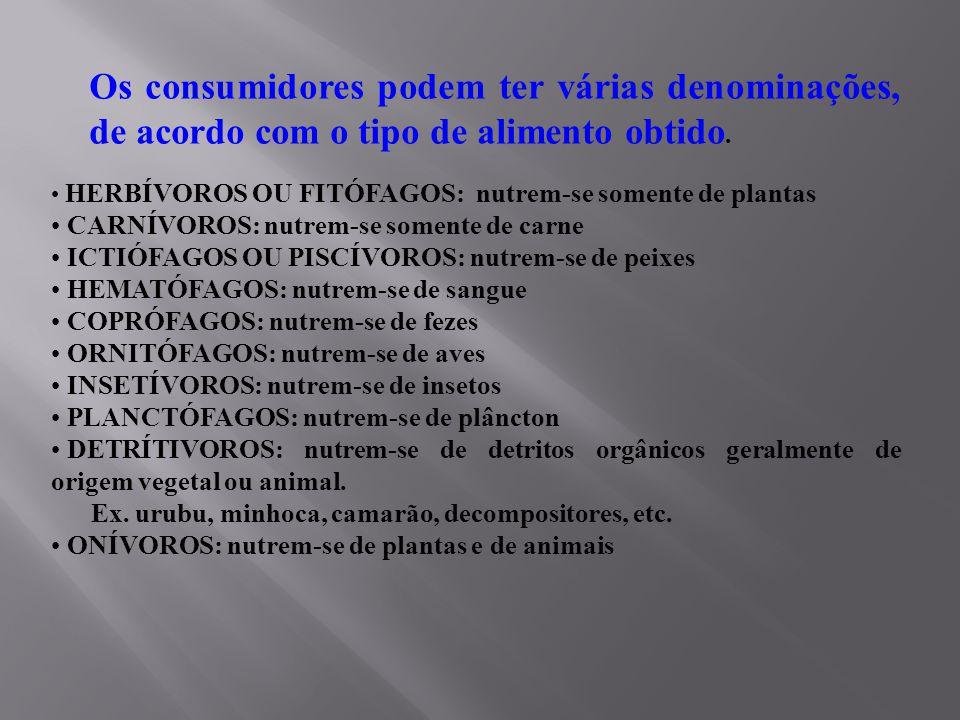 COMPONENTES DE UMA CADEIA ALIMENTAR - PRODUTORES:  AUTÓTROFOS: FOTOSSÍNTESE QUIMIOSSÍNTESE - CONSUMIDORES:  HETERÓTROFOS: HERBÍVOROS CARNÍVOROS ONÍVOROS - DECOMPOSITORES:  SAPRÓFAGOS: (FUNGOS E BACTÉRIAS)