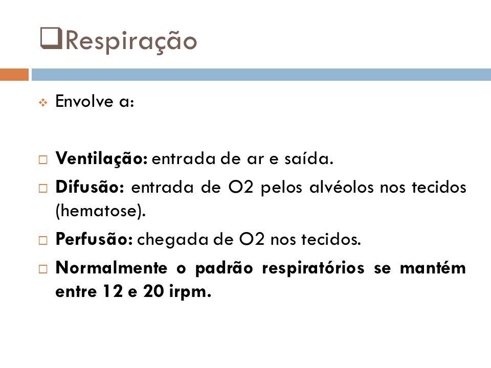  Respiração  Envolve a:  Ventilação: entrada de ar e saída.  Difusão: entrada de O2 pelos alvéolos nos tecidos (hematose).  Perfusão: chegada de