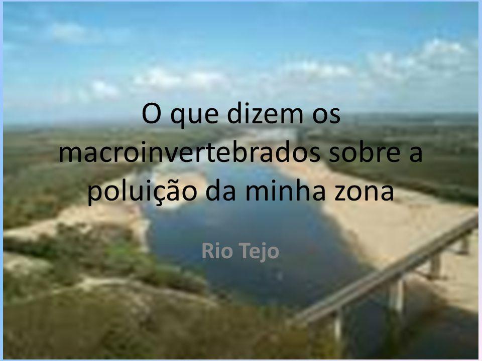O que dizem os macroinvertebrados sobre a poluição da minha zona Rio Tejo