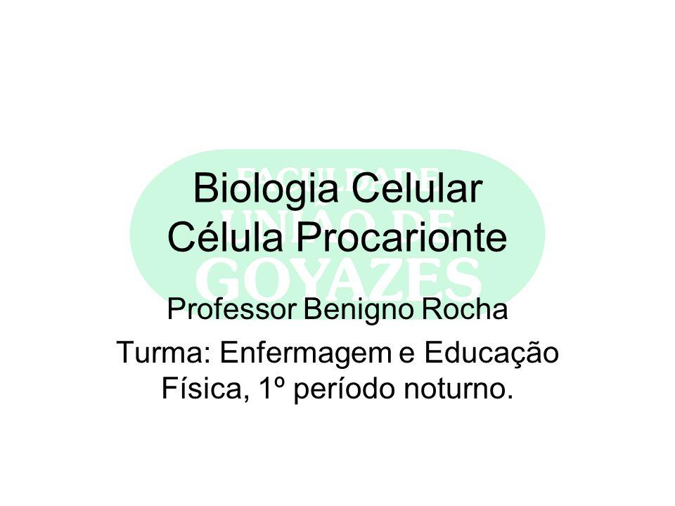 Biologia Celular Célula Procarionte Professor Benigno Rocha Turma: Enfermagem e Educação Física, 1º período noturno.