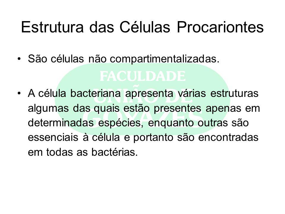 Estrutura das Células Procariontes São células não compartimentalizadas. A célula bacteriana apresenta várias estruturas algumas das quais estão prese