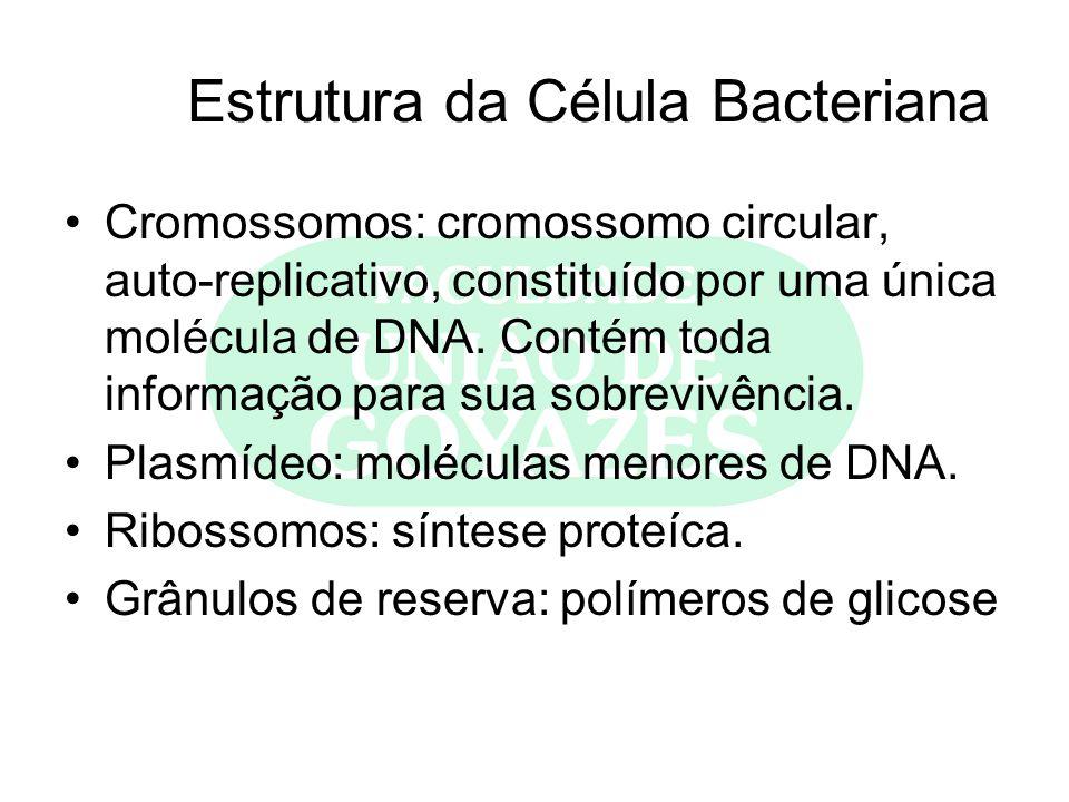 Estrutura da Célula Bacteriana Cromossomos: cromossomo circular, auto-replicativo, constituído por uma única molécula de DNA. Contém toda informação p