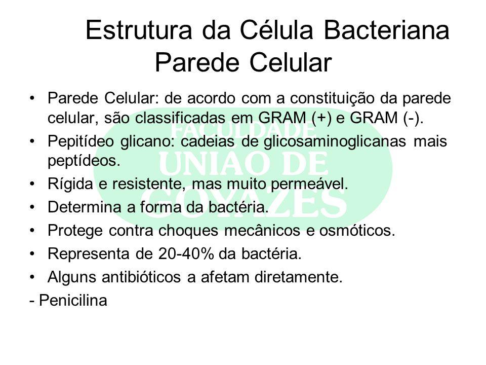 Estrutura da Célula Bacteriana Parede Celular Parede Celular: de acordo com a constituição da parede celular, são classificadas em GRAM (+) e GRAM (-)