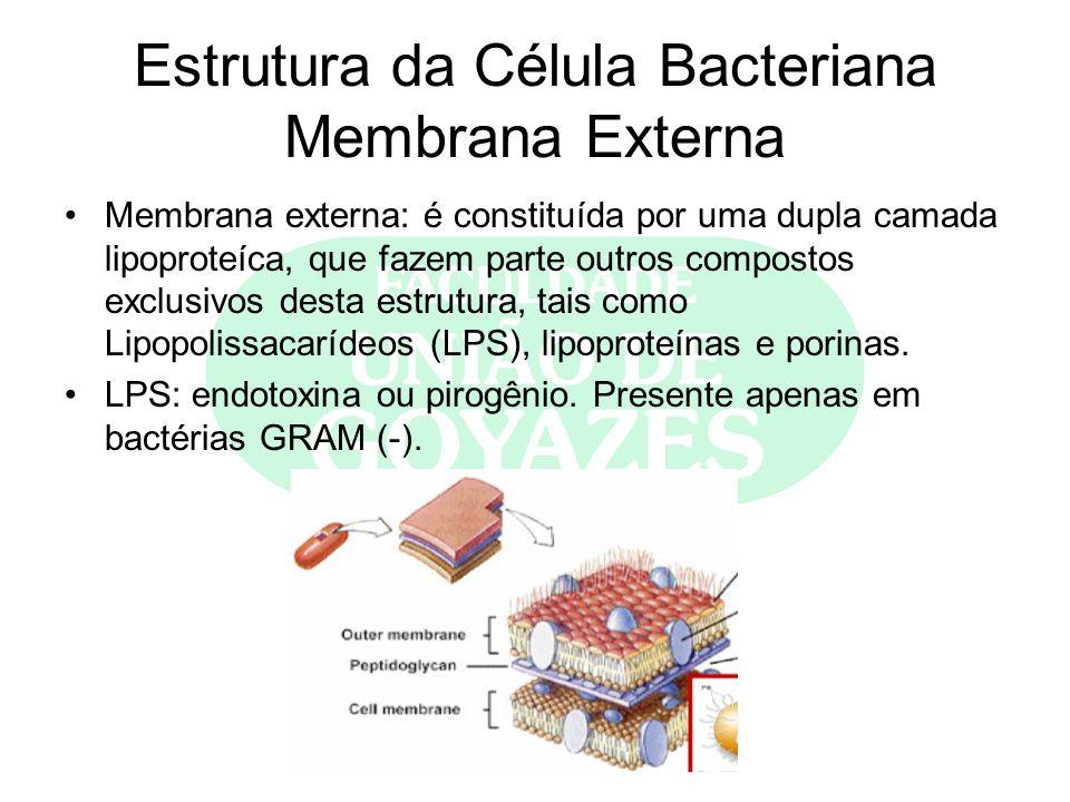 Estrutura da Célula Bacteriana Membrana Externa Membrana externa: é constituída por uma dupla camada lipoproteíca, que fazem parte outros compostos ex