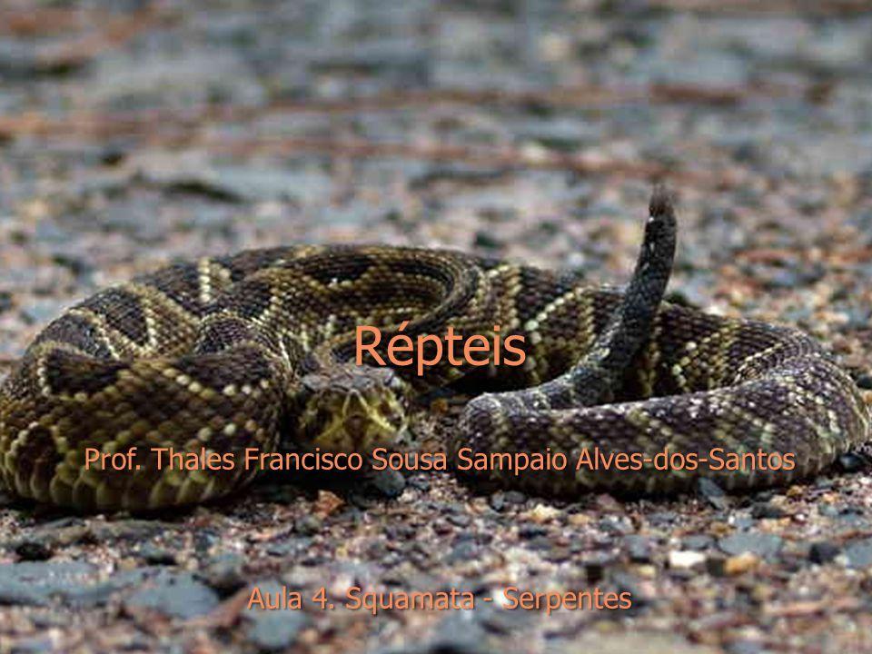  Boidae  Boas e pítons; inclui as maiores serpentes viventes, mas várias espécies são pequenas  Ocorrem em florestas úmidas, secas, de coníferas ou de montanhas e desertos arenosos ou rochosos  Hábitos terrestres, arbóreos, aquáticos e semifossoriais  Dietas extremamente variadas  Fossetas labiais  Pythoninae  ovíparos; fêmeas constroem ninhos de folhas ou desovam em buracos no chão; se enrolam nos ovos e os incubam com contrações musculares  Boinae e Erycinae  vivíparos  Eunectes murinus  anacondas; predadoras de espreita, se alimentam de peixes, anfíbios, tartarugas, jacarés, aves e mamíferos grandes (pacas, capivaras, veados)  Ca.