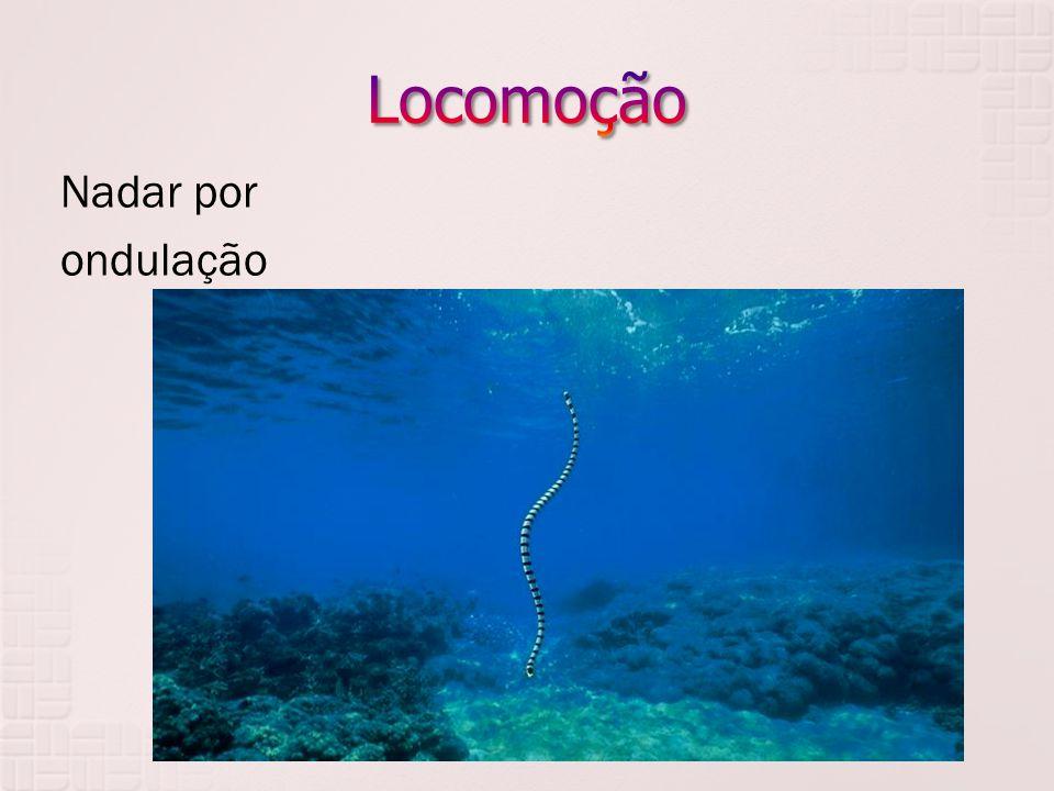 Nadar por ondulação