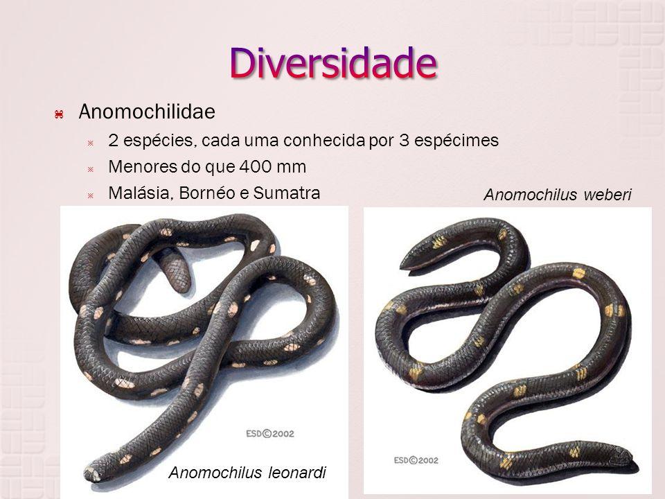  Anomochilidae  2 espécies, cada uma conhecida por 3 espécimes  Menores do que 400 mm  Malásia, Bornéo e Sumatra Anomochilus leonardi Anomochilus weberi