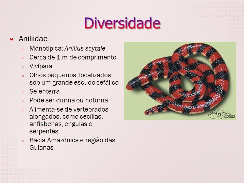  Aniliidae  Monotípica: Anilius scytale  Cerca de 1 m de comprimento  Vivípara  Olhos pequenos, localizados sob um grande escudo cefálico  Se en