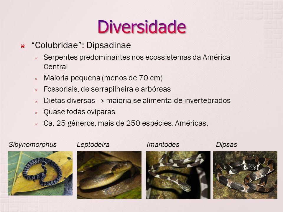  Colubridae : Dipsadinae  Serpentes predominantes nos ecossistemas da América Central  Maioria pequena (menos de 70 cm)  Fossoriais, de serrapilheira e arbóreas  Dietas diversas  maioria se alimenta de invertebrados  Quase todas ovíparas  Ca.