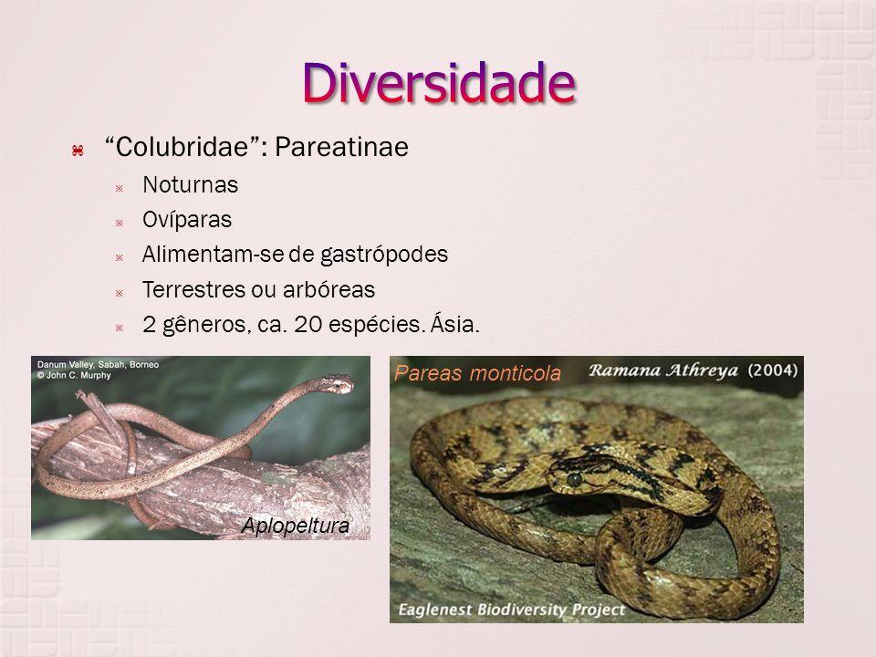  Colubridae : Pareatinae  Noturnas  Ovíparas  Alimentam-se de gastrópodes  Terrestres ou arbóreas  2 gêneros, ca.