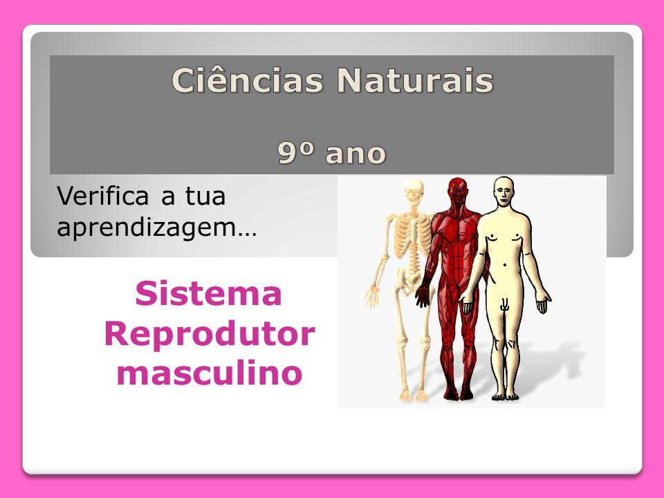 Verifica a tua aprendizagem… Sistema Reprodutor masculino