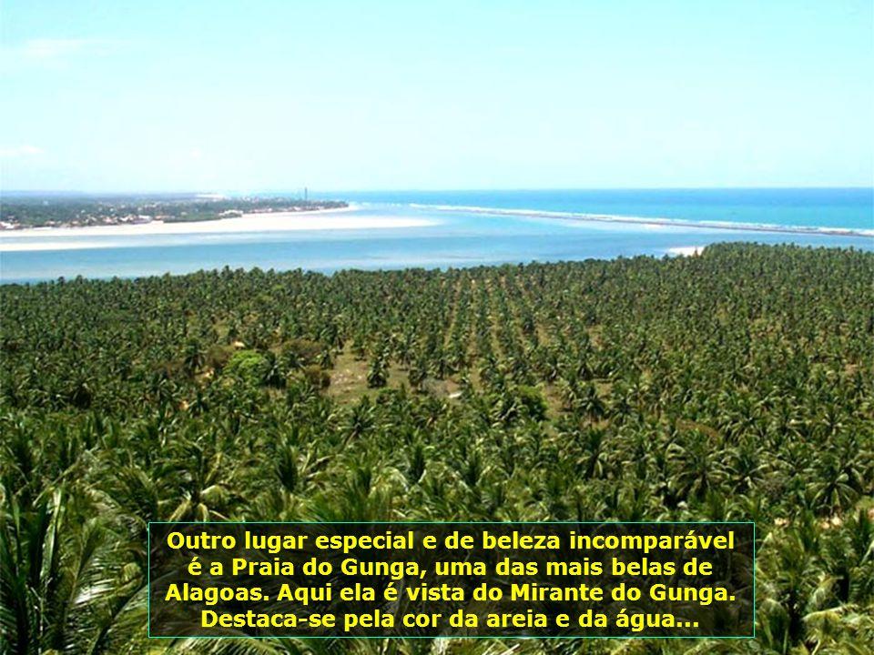 Alagoas tem sua economia baseada na cana-de- açúcar e no turismo. Aqui, os canaviais dividem a beleza da paisagem com o mar e os coqueirais...