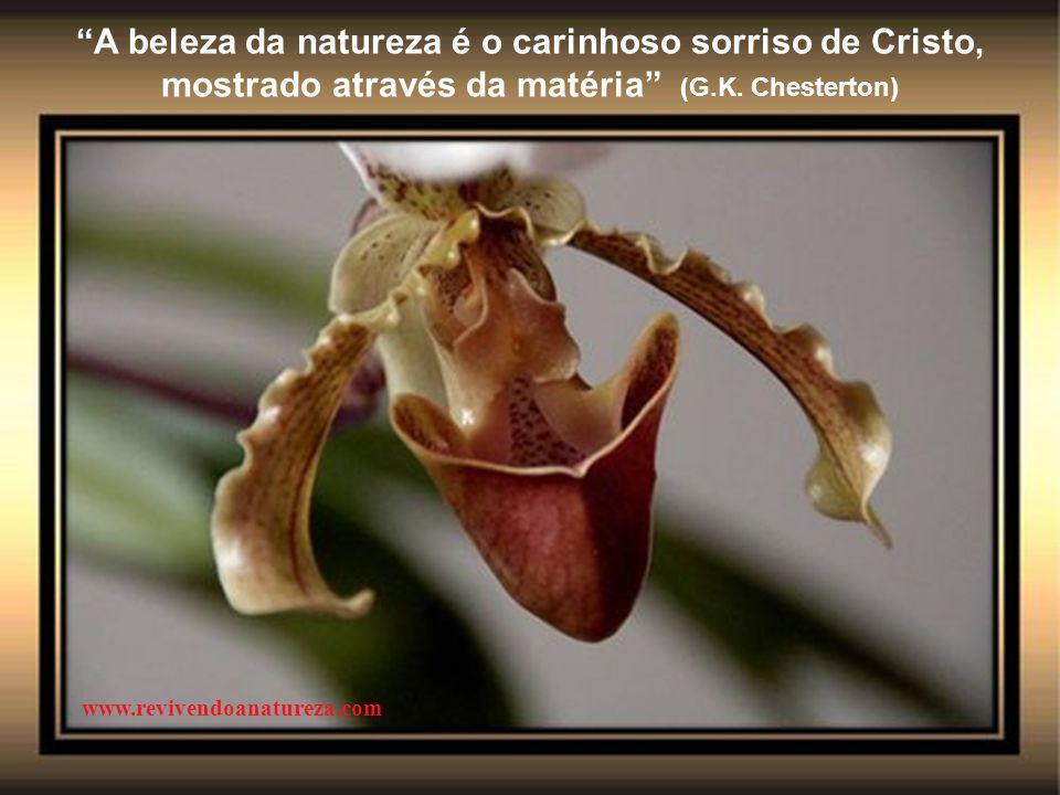"""""""O ideal seria se a primavera acontecesse o tempo todo para renovar o espírito, assim como as flores se renovam"""" (Irene Alvina) www.revivendoanatureza"""