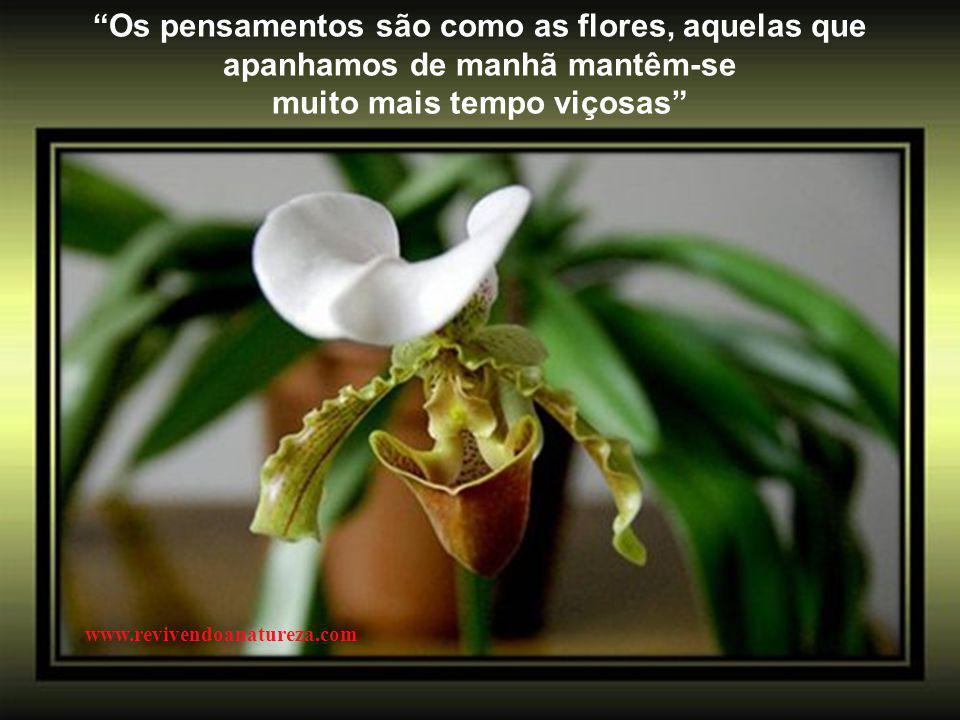 """""""A verdadeira felicidade é olhar para traz e sentir orgulho da sua infância"""" (Irene Alvina) www.revivendoanatureza.com"""