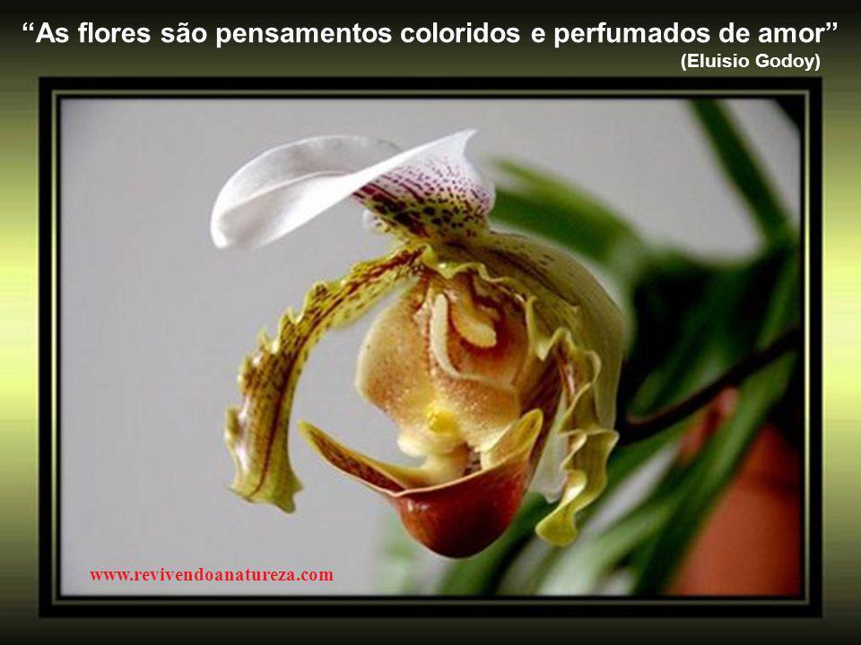 """""""Os pensamentos são como as flores, aquelas que apanhamos de manhã mantêm-se muito mais tempo viçosas"""" www.revivendoanatureza.com"""