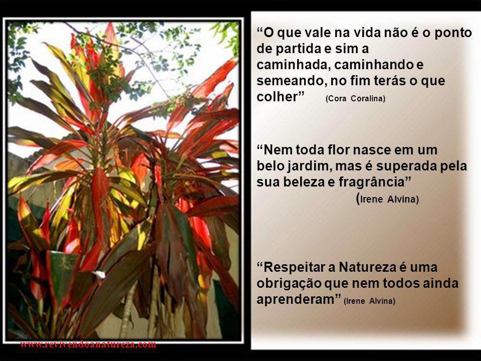 """""""As flores são pensamentos coloridos e perfumados de amor"""" (Eluisio Godoy) www.revivendoanatureza.com"""