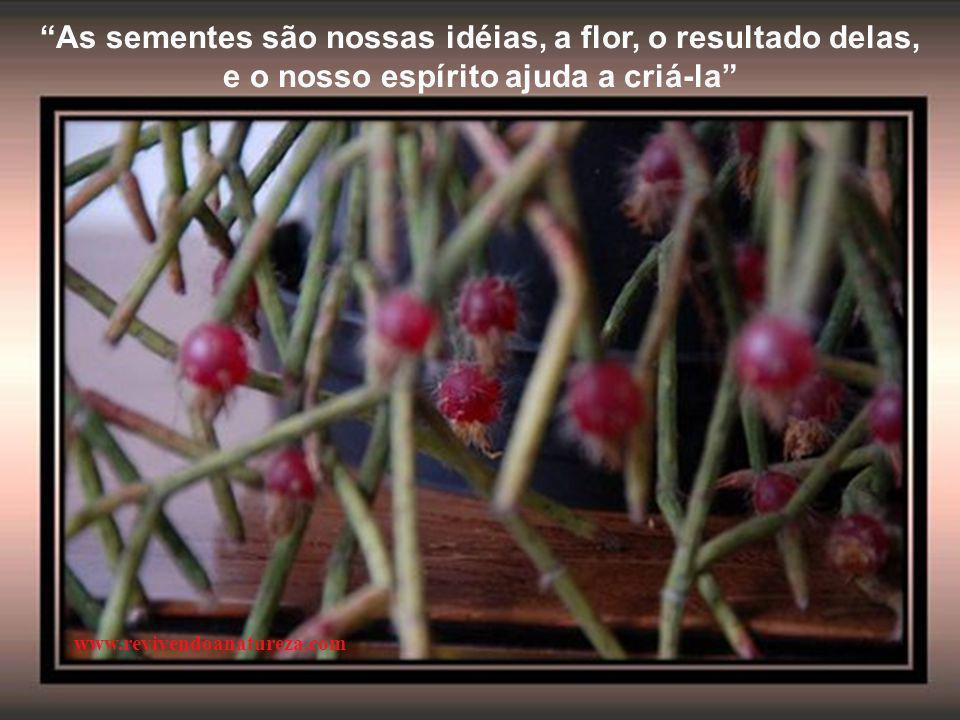 """""""Viver é plantar. É atitude de constante semeadura, de deixar cair na terra de nossa existência as mais diversas formas de sementes"""" (Pe. Fábio de Mel"""