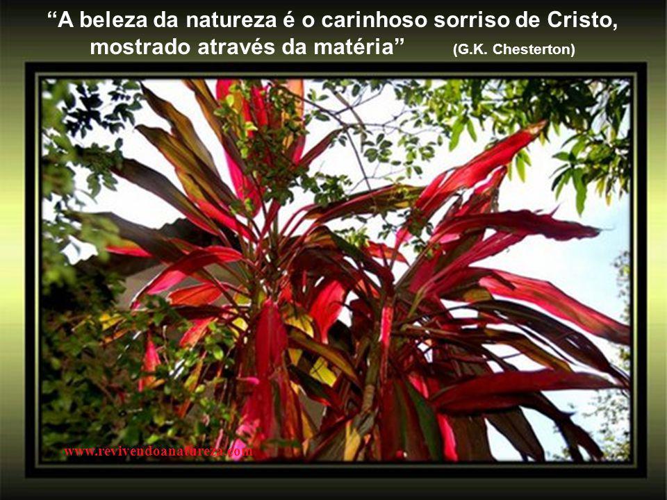 """""""As sementes são nossas idéias, a flor, o resultado delas, e o nosso espírito ajuda a criá-la"""" www.revivendoanatureza.com"""