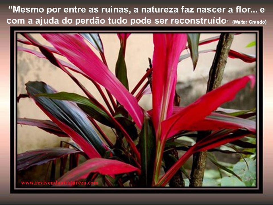 """""""A beleza de cada flor pode interferir na beleza de todo jardim"""" www.revivendoanatureza.com"""