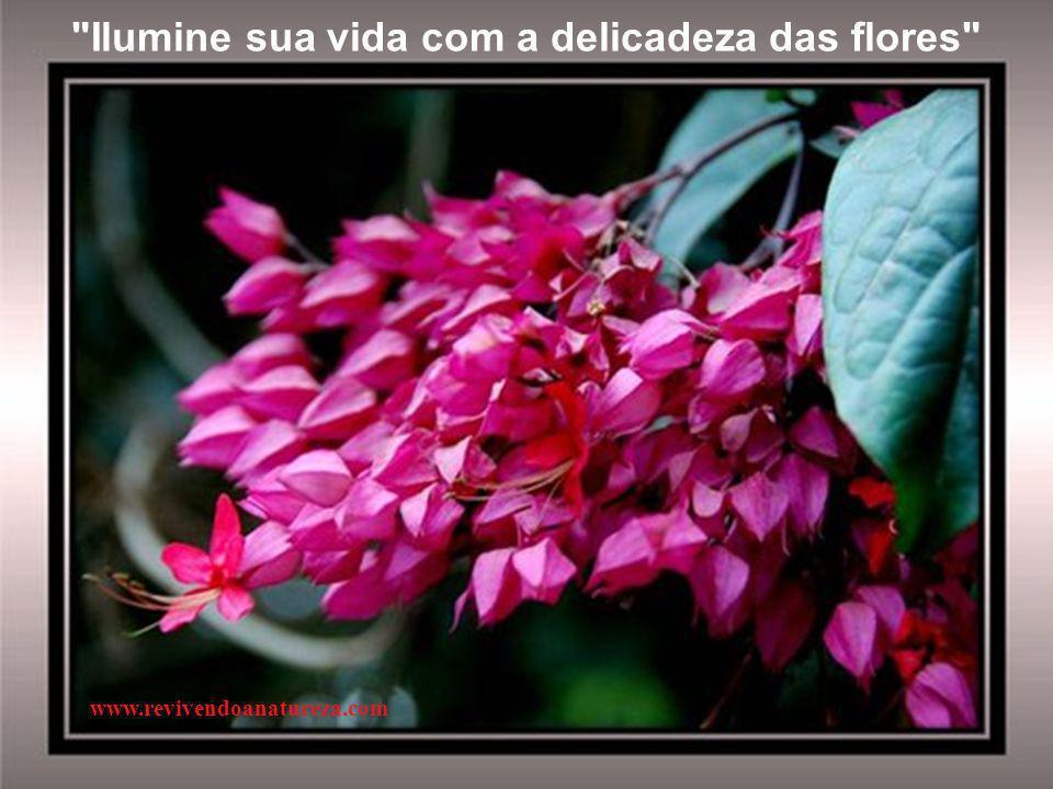 """""""Para colhermos bons frutos, antes plantemos com exemplos e atos de qualidade sementes de boa vontade"""" www.revivendoanatureza.com"""