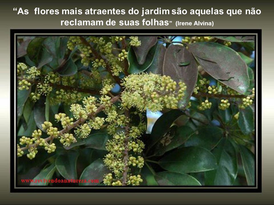 """""""Assim como a primavera renova as flores, você também pode renovar o seu espírito e ser mais feliz """" (Irene Alvina) www.revivendoanatureza.com"""