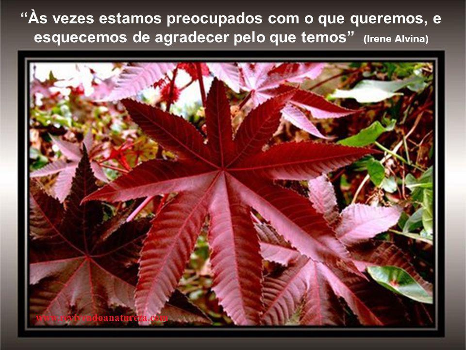 """""""As flores mais atraentes do jardim são aquelas que não reclamam de suas folhas """" (Irene Alvina) www.revivendoanatureza.com"""