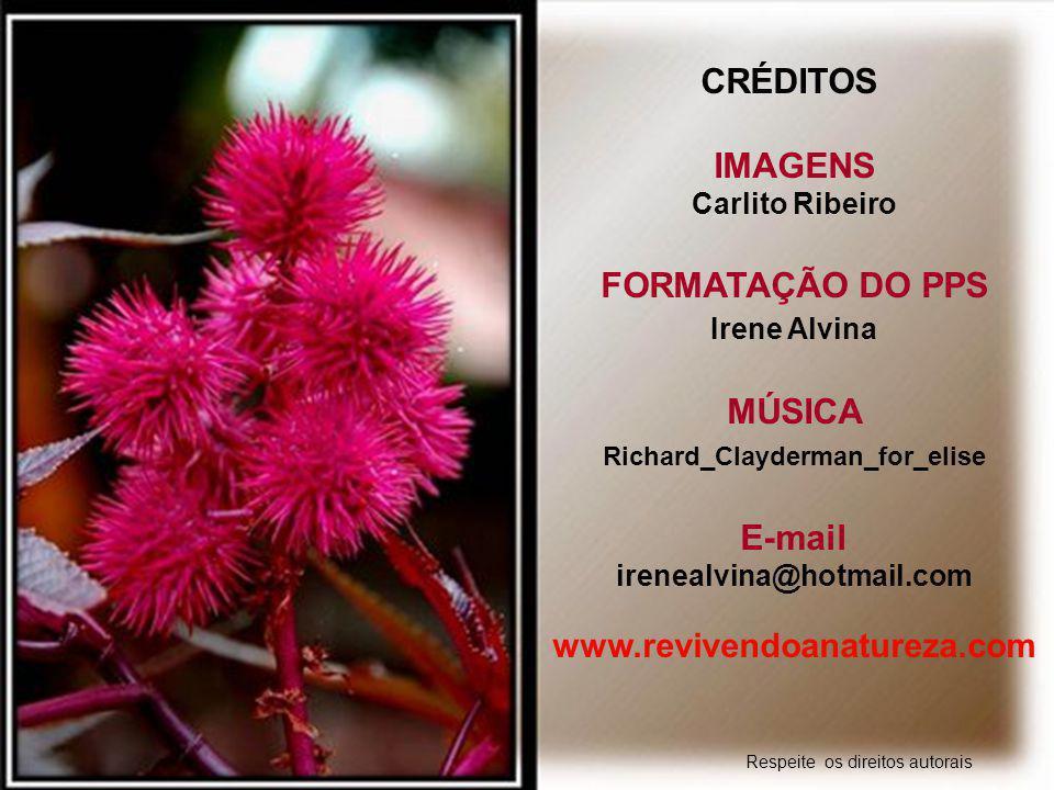 """""""Às vezes estamos preocupados com o que queremos, e esquecemos de agradecer pelo que temos"""" (Irene Alvina) www.revivendoanatureza.com"""
