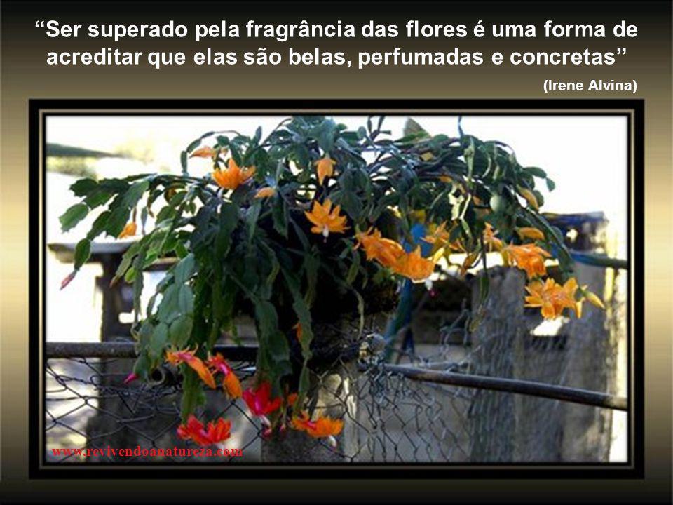 www.revivendoanatureza.com Ser superado pela fragrância das flores é uma forma de acreditar que elas são belas, perfumadas e concretas (Irene Alvina)