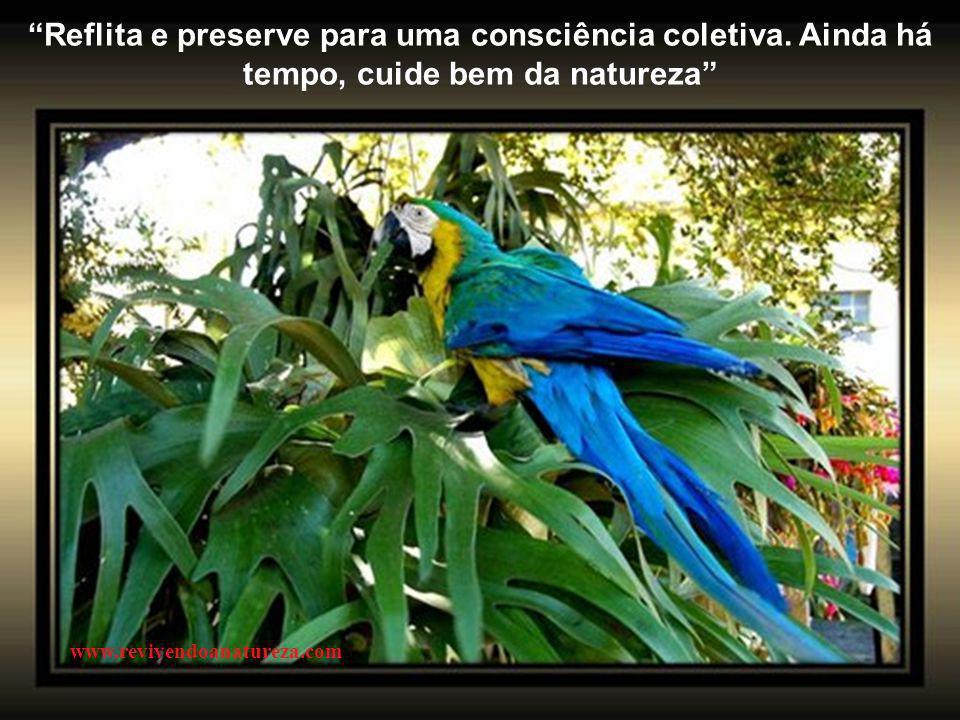 As flores são pensamentos coloridos e perfumados de amor (Eluisio Godoy) www.revivendoanatureza.com
