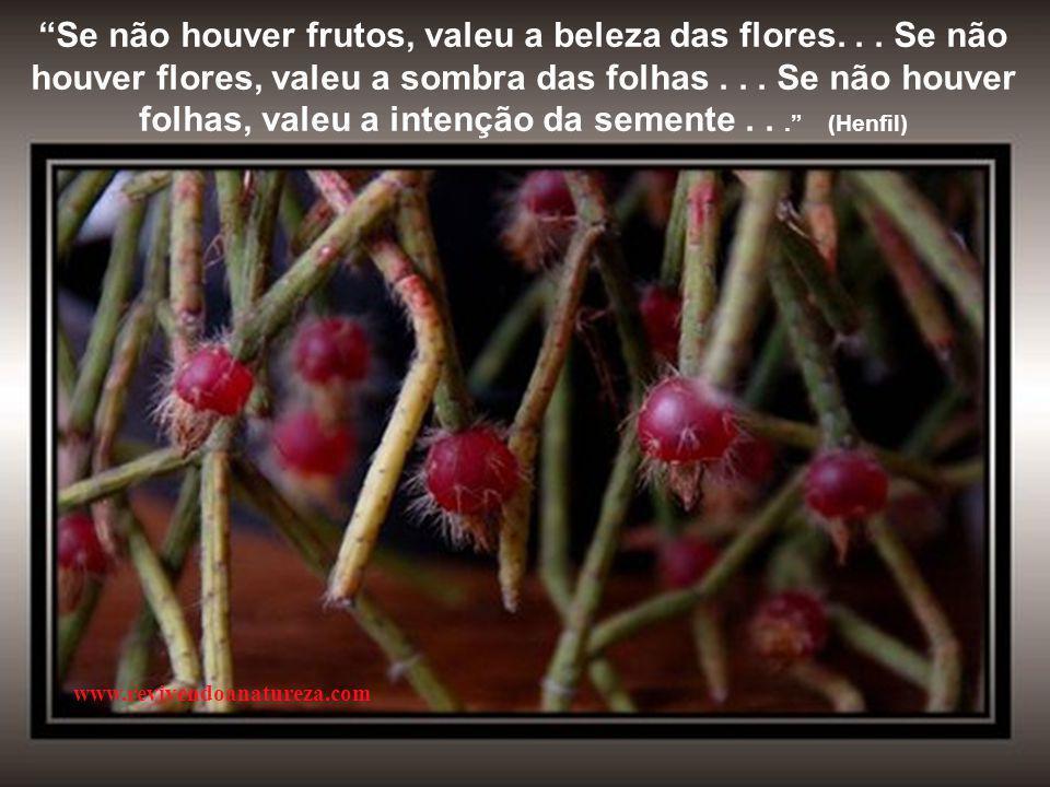 Se não houver frutos, valeu a beleza das flores...