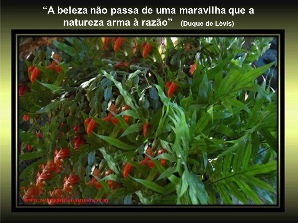 A beleza não passa de uma maravilha que a natureza arma à razão ( Duque de Lévis) www.revivendoanatureza.com