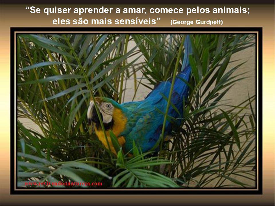 Se quiser aprender a amar, comece pelos animais; eles são mais sensíveis (George Gurdjieff) www.revivendoanatureza.com