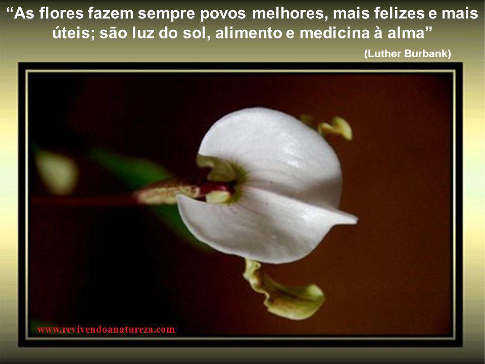 As flores fazem sempre povos melhores, mais felizes e mais úteis; são luz do sol, alimento e medicina à alma (Luther Burbank) www.revivendoanatureza.com